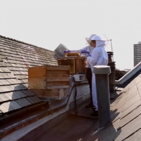 How to become an urban beekeeper